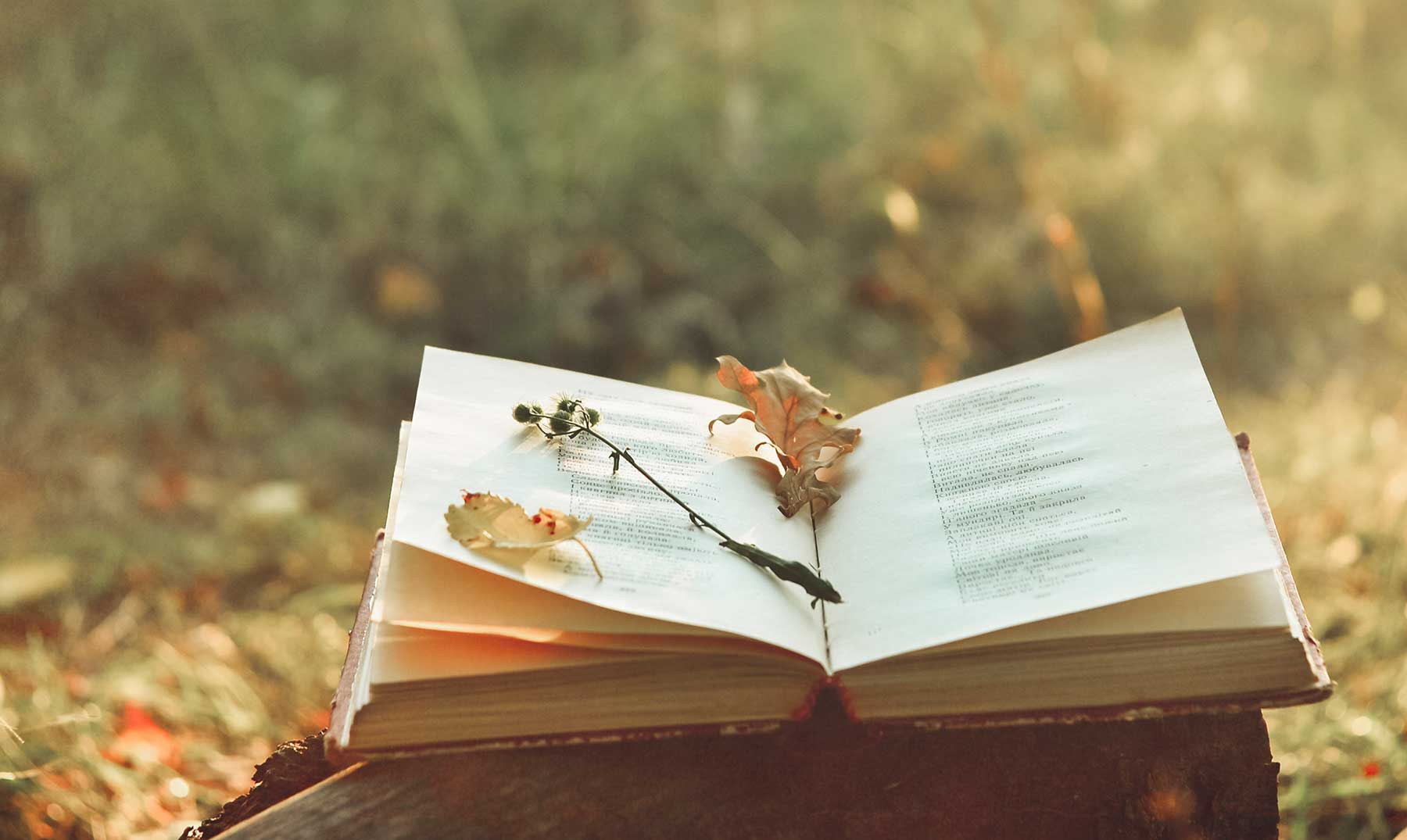 Poesía como terapia: Carson y Glück